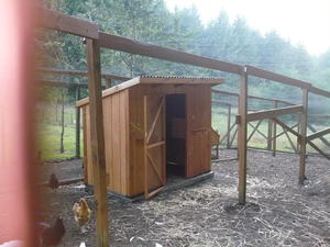 new chicken coup